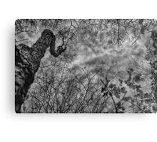 Creepy Tree Metal Print