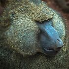 Olive Baboon by Susana Weber