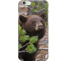 Black Bear with Cinnamon Color iPhone Case/Skin