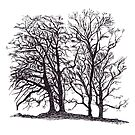 Trees Silhouette by Gillian Cross