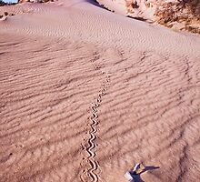 Tracks by Steve Chapple
