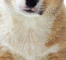 A Little Puppy Sticker
