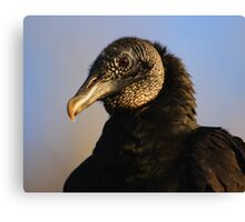 Black Vulture & Blue Sky Canvas Print