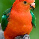 King Parrot by Michael Eyssens