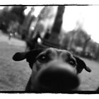 dog looking up by mike schreiber