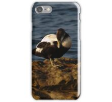 Eider Duck on Rocks iPhone Case/Skin