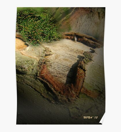 BARK ABSTRACT TEXTURE  Poster