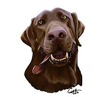 Chocolate Lab Caricature Photographic Print