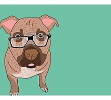 Smart dog Photographic Print
