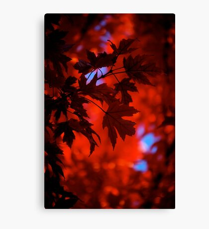 Autumn Blaze Canvas Print