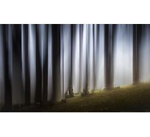 Spooky woodland Photographic Print