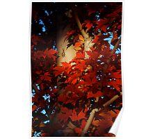 Autumn Blaze III Poster