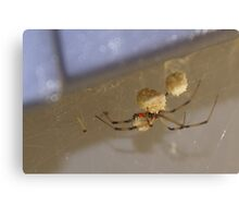 Brown Widow Spider - waiting for her eggs to hatch! OH My! Canvas Print