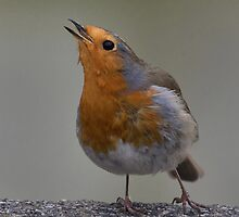 Birdsong by Thea 65