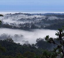 """""""Misty Blue"""" by debsphotos"""
