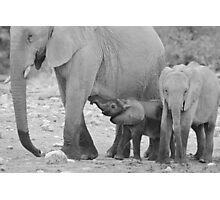 Elephant Love - Milk's Wonderful Strength  Photographic Print