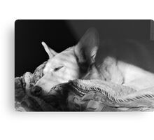 Canine Bliss Metal Print