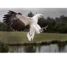 Landing gear down!! Photographic Print