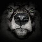 Big bad wolf by Kurt  Tutschek