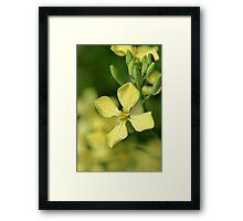 Wild Radish Framed Print