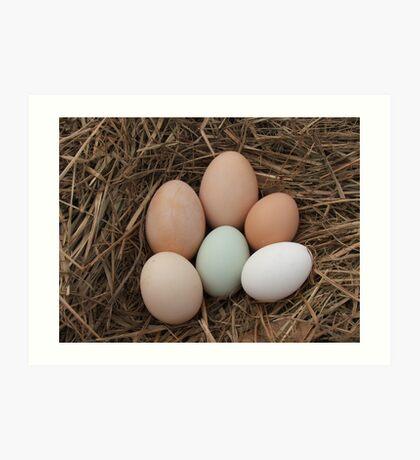 Farm Fresh Eggs Art Print