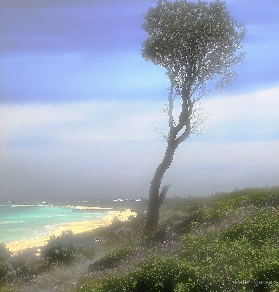 Solitary banksia by Peter Krause