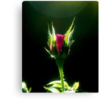 Little Red Rose Canvas Print