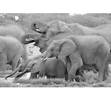 Elephant Family - Tusks and Trunks Photographic Print