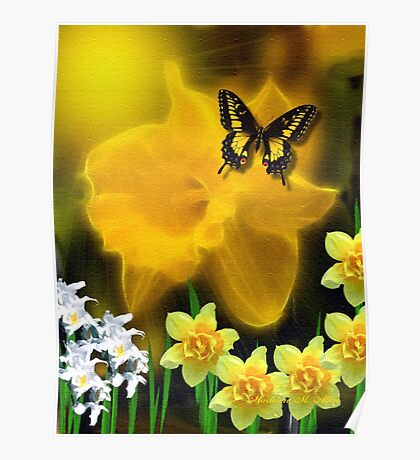 ~ DAFFODIL DELIGHT ~ Poster