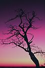 DEAD TREE,SUNSET by Chuck Wickham