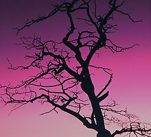 DEAD TREE,SUNSET by Chuck Wickham