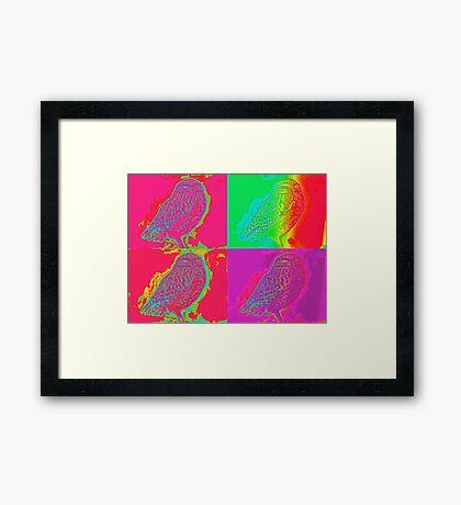 Owl - Multi-coloured Framed Print