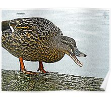 Quackers Poster
