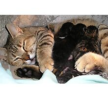 Mother Tabby Cat Suckling Four Newborn Kittens Photographic Print