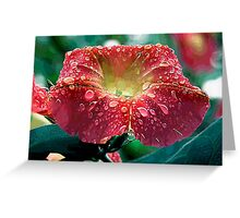 Abstract Red Morning Glory With Water Drops Greeting Card