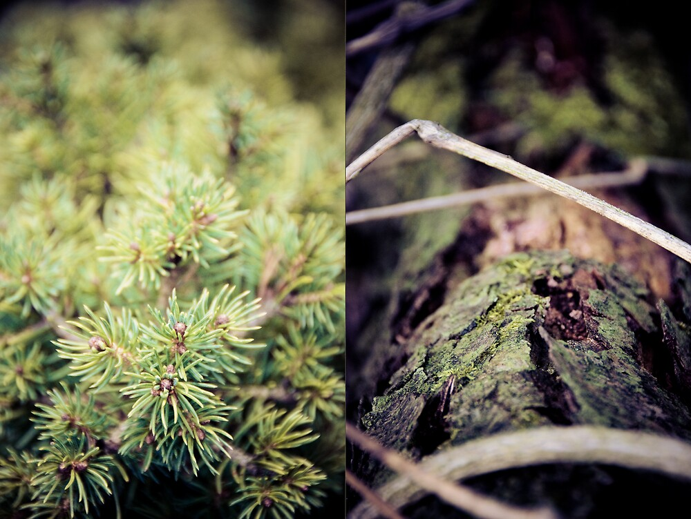 diptych #2 by Markus Mayer