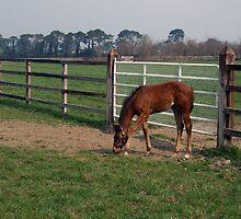 Beautiful foal by John Quinn