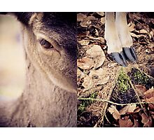 diptych #3 Photographic Print