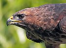 Buzzard-Eye View by Krys Bailey