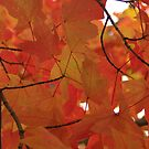 Autumn Leaves On The Tree by John Ayo