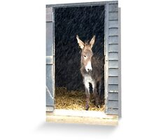 Sanctuary From the Rain Greeting Card