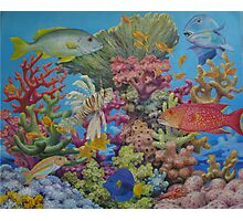 Red Sea Reef Photographic Print
