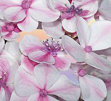 Hydrangea Petals by Bonnie T.  Barry