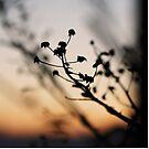 Sunset Shadows by AbigailJoy