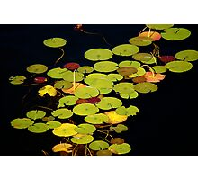 Lily pads on black Photographic Print
