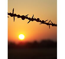 Barbed Beauty Photographic Print