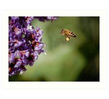Bee In Flight Art Print