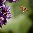 Bee In Flight by pulsdesign