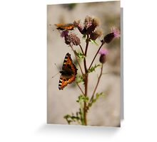 BUTTERFLY ON THISTLE 2 Greeting Card
