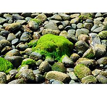 Algae-covered stone on pebble beach Photographic Print